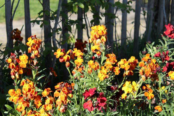 kleurrijke_tuin